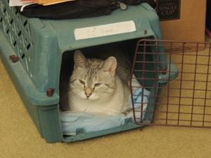 CJ in her box (1)